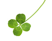 Superstitions - Zapp! English Listening 3.16